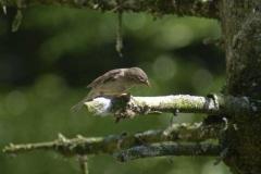 kleiner_vogel