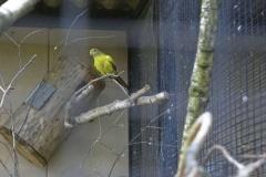 vogel_1