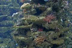 fische_und_korallen_3