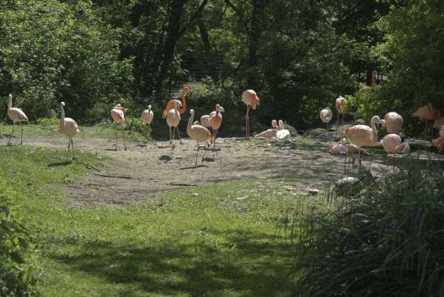 flamingos_1
