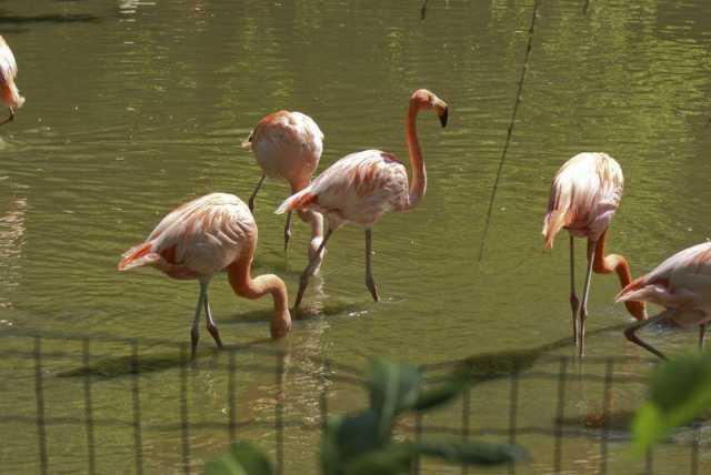 flamingos_3
