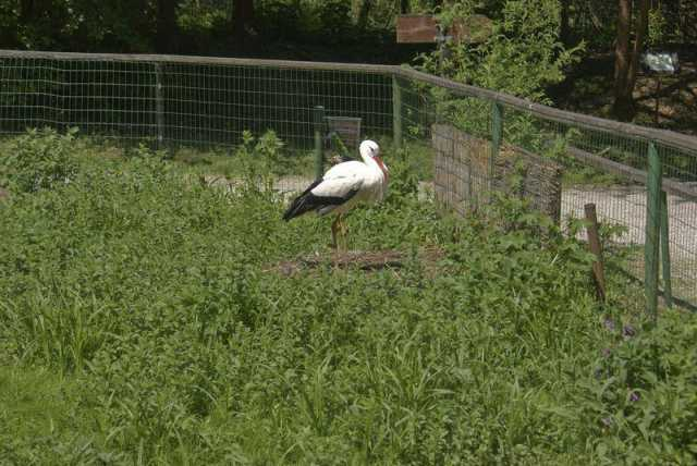storch_2