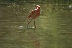 flamingos_4