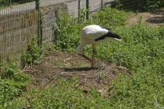 storch_2_1