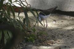 vogel_3