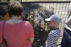 zebra_frech_2