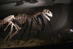dinosaurier_3
