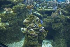 fische_und_korallen_2