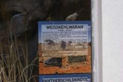 weisskehlwaran_info